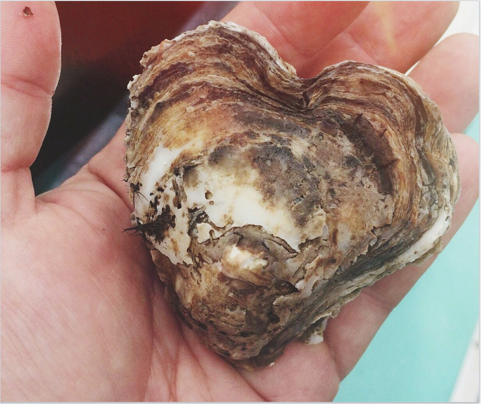OYSTER_HEART